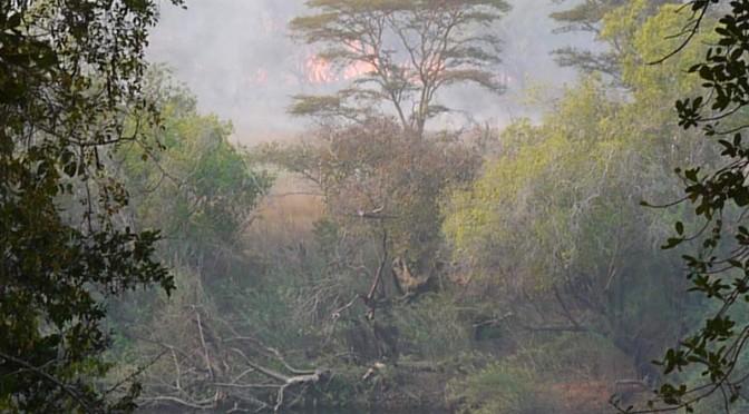 Bush fire across the river